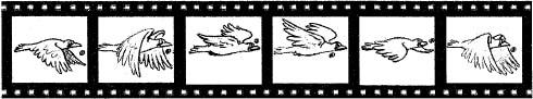 Виды анимации